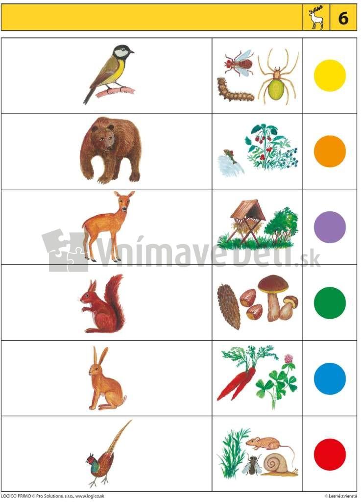 Lesne Zvierata Vzdelavacia Hra Logico Primo V Obchode Vnimave Deti
